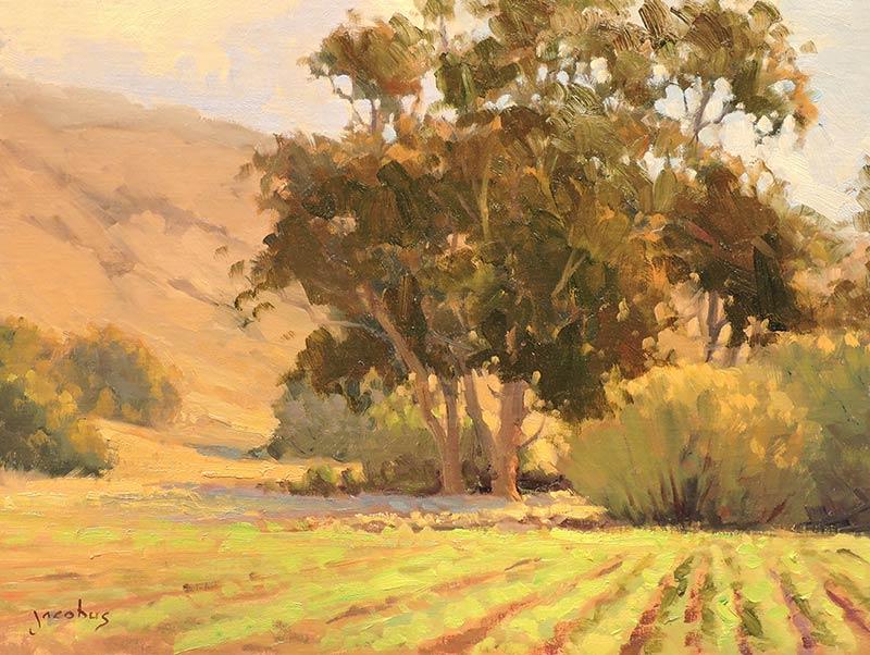 Eucalyptus in Cambria