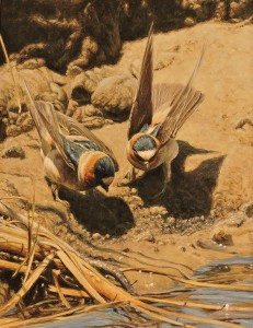 The Cliff Swallows